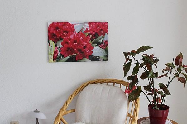 Bild rote Blume 60x40 Foto auf Leinwand Rhododendron 1